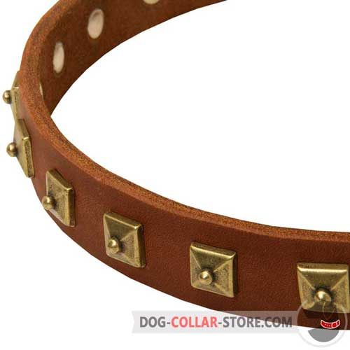 Brass-Plated Studs on Everyday Walking Leather Dog Collar