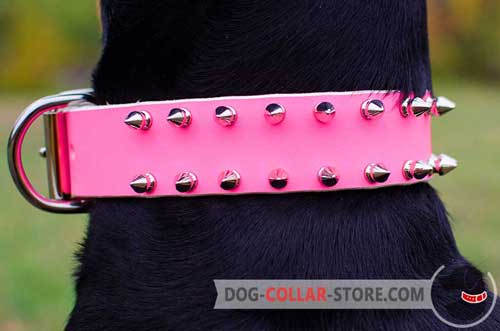 Fashionable Nickel Spikes On Pink Leather Dog Collar