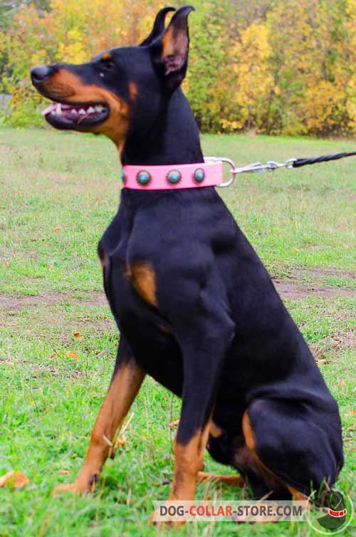 Pink Leather Doberman Collar With Blue Stones