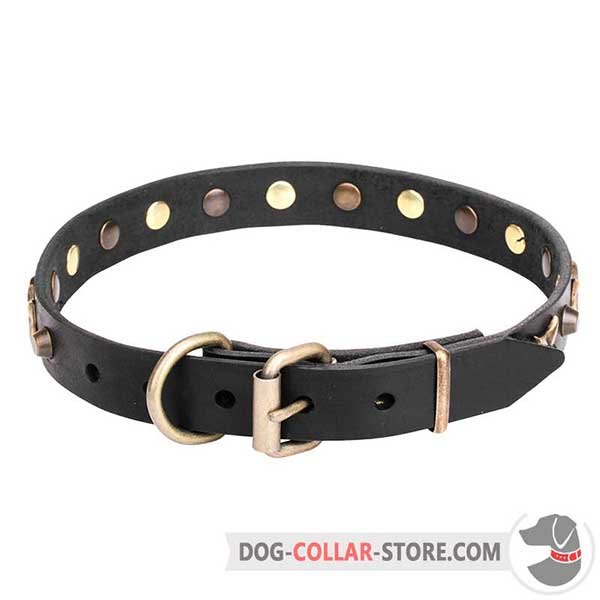 Dog Collar with brass plated hardware