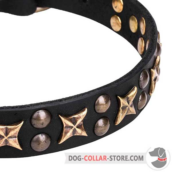 Brass Studs and Stars on Wide Dog Collar