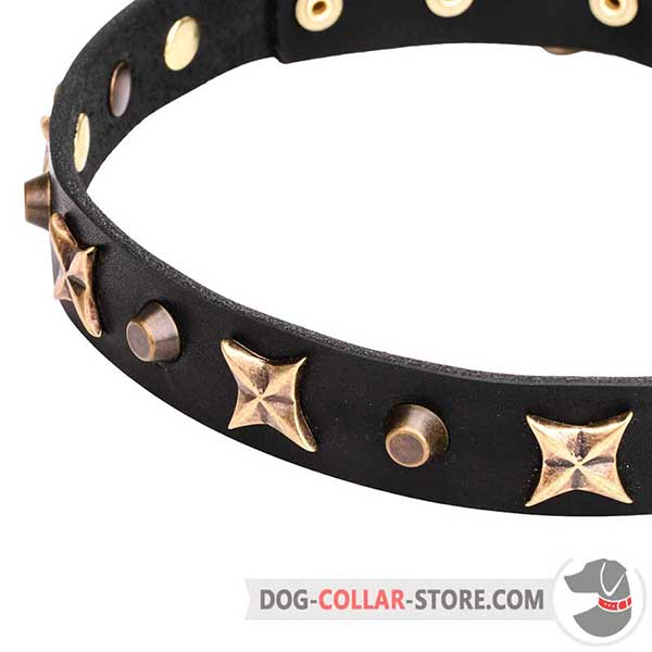 Brass plated Cones and Stars on Narrow Dog Collar