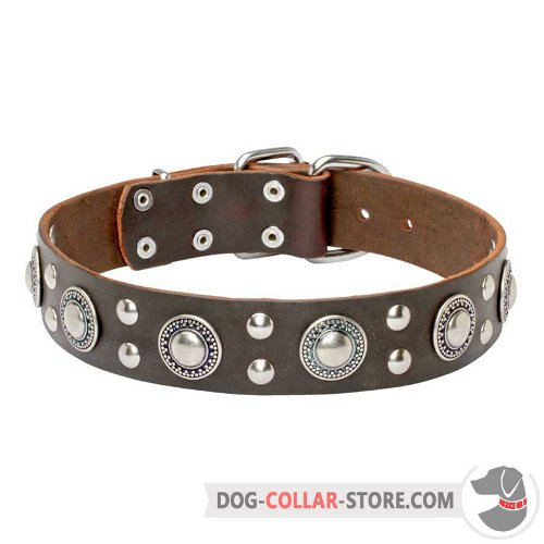 Leather Dog Collar designed for walking and obedience training