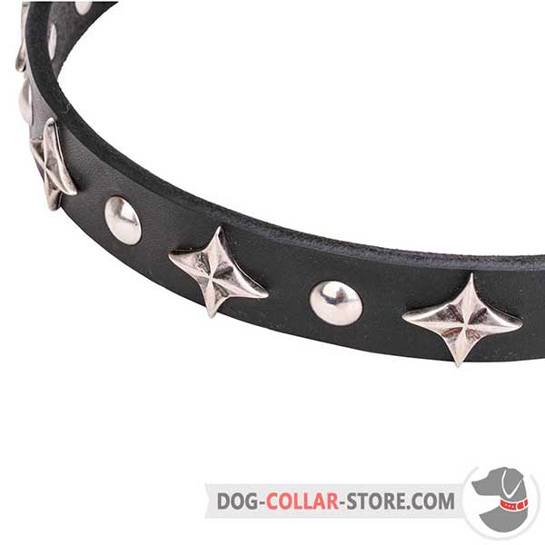 Stars and Studs on Dog Collar