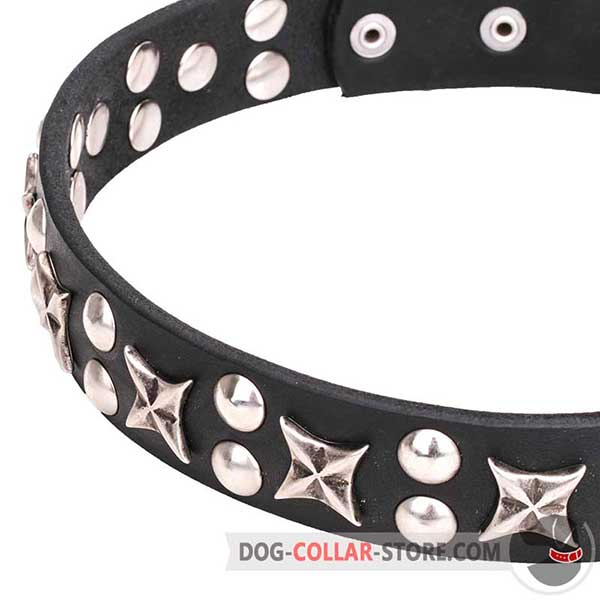 Stars and Studs on Wide Dog Collar