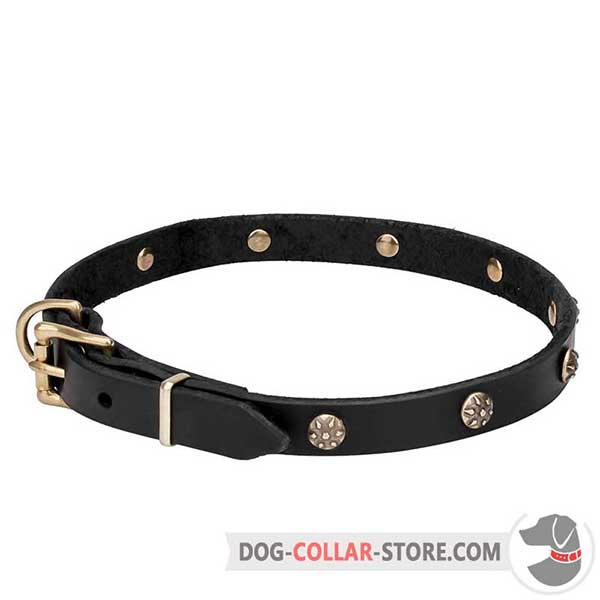 Dog Collar for stylish daily walking