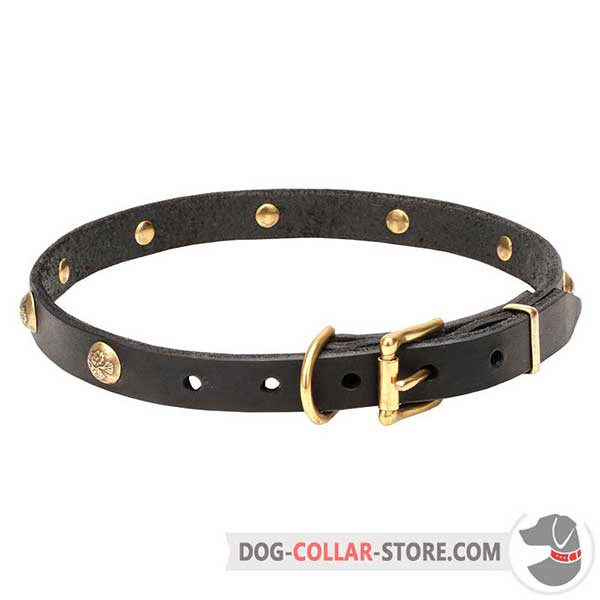 Dog Collar: riveted brass-plated hardware