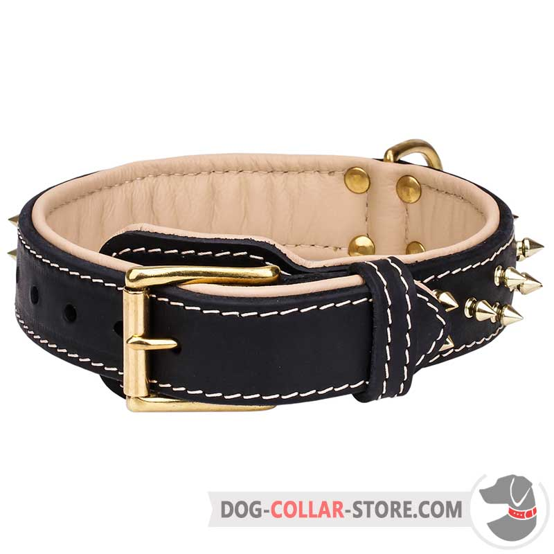 Spiked Design Padded Leather Dog Collar with Brass-Plated Buckle