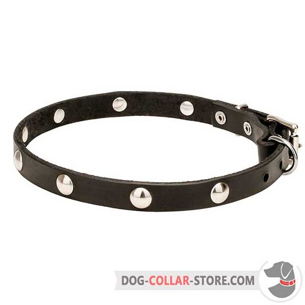 Dog Collar, lovely design