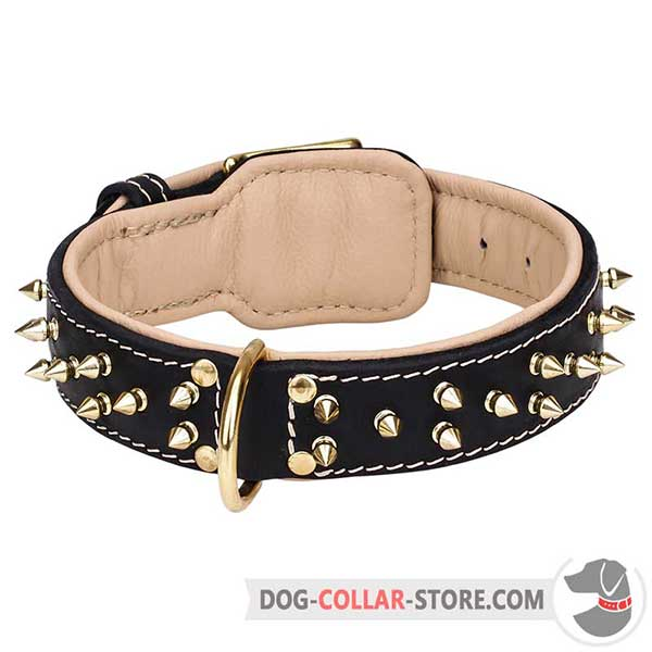 Brass Spikes and D-Ring on Nappa Padded Leather Dog Collar