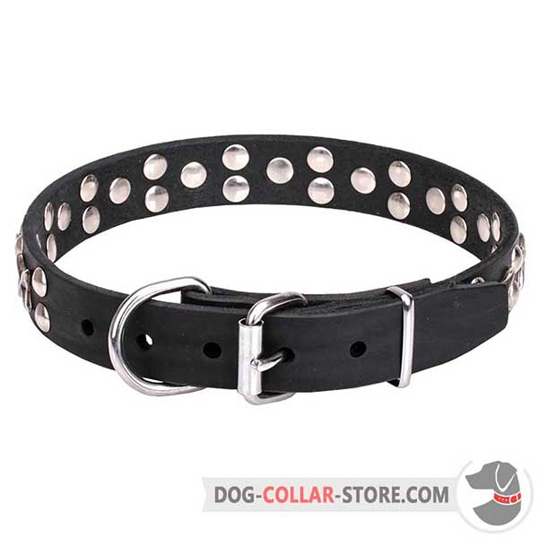 Dog Collar with chrome plated hardware
