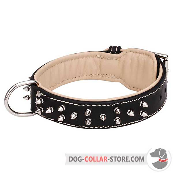 Padded Leather Dog Collar of Spiked Design