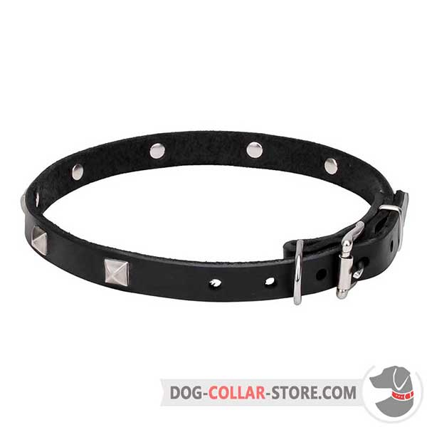 Dog Collar with chrome plated fittings