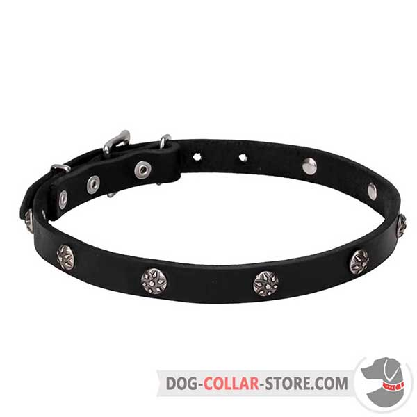 Dog Collar for stylish promenades