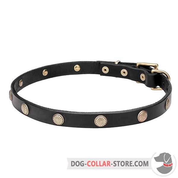 Dog Collar decorated with engraved studs