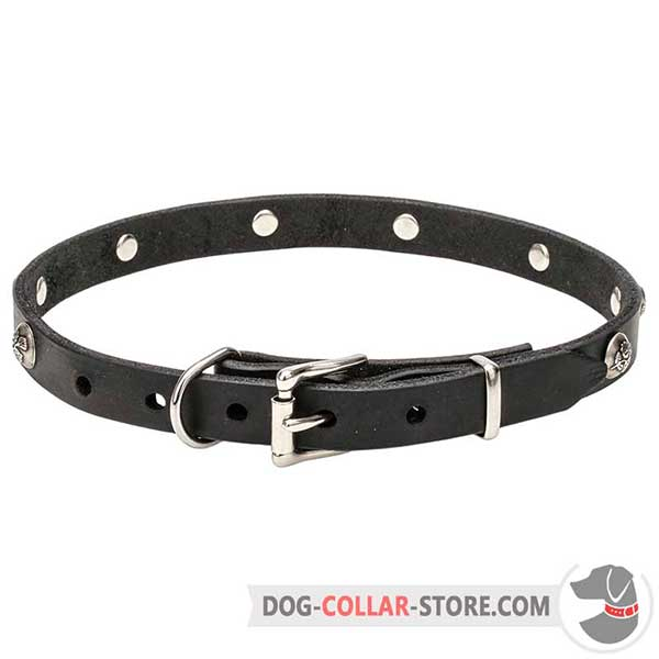 Dog Collar: riveted nickel-plated hardware