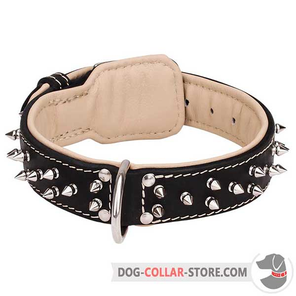 Spiked Padded Leather Dog Collar with Reliable D-ring