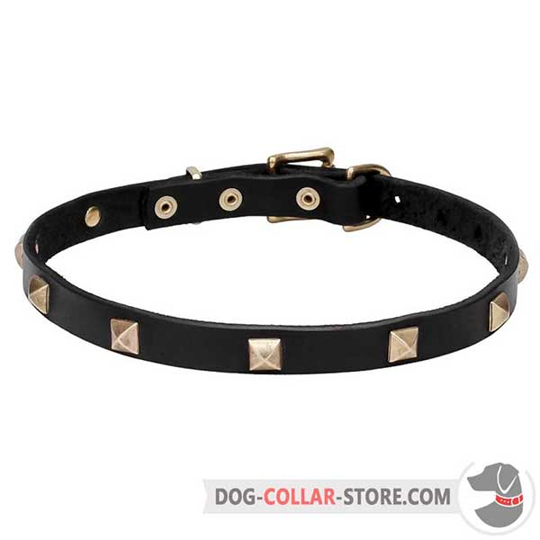 Dog Collar with brass plated fittings