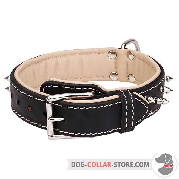 Steel Nickel Plated D-Ring on Spiked Leather Dog Collar