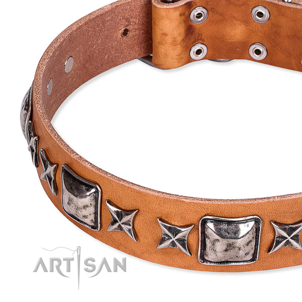 Daily use adorned dog collar of best quality full grain leather