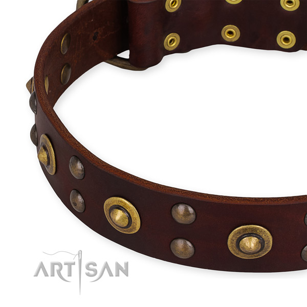 Leather collar with corrosion proof fittings for your impressive four-legged friend