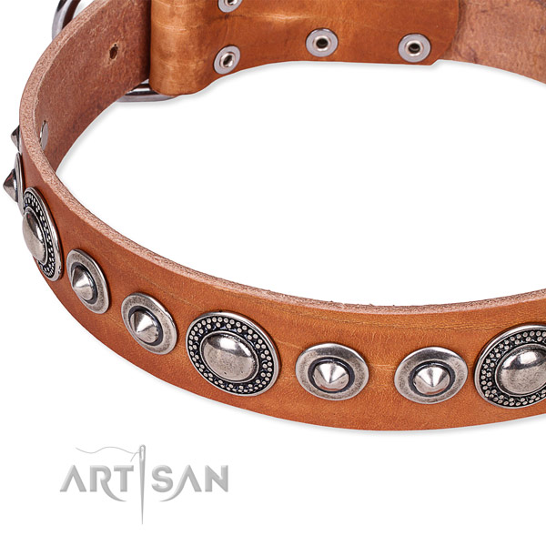 Daily walking adorned dog collar of fine quality full grain leather
