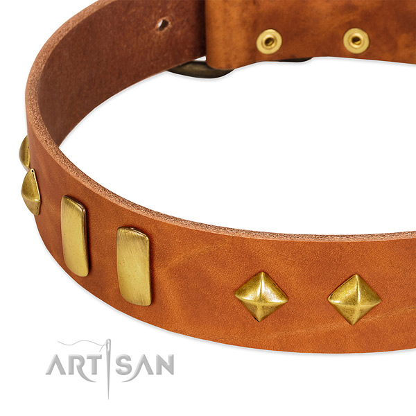 Everyday walking full grain natural leather dog collar with unique embellishments