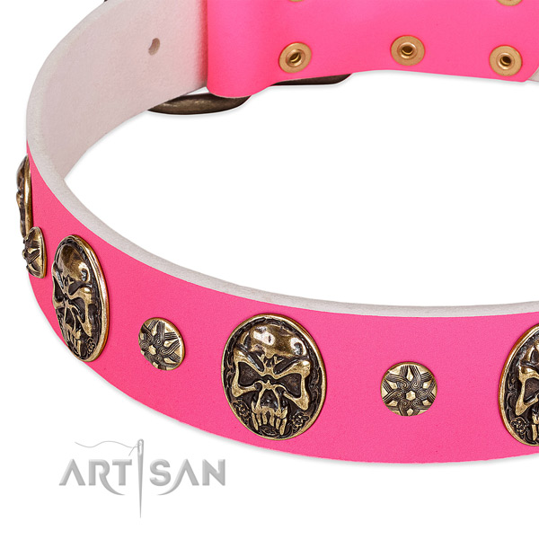 Incredible dog collar made for your beautiful dog