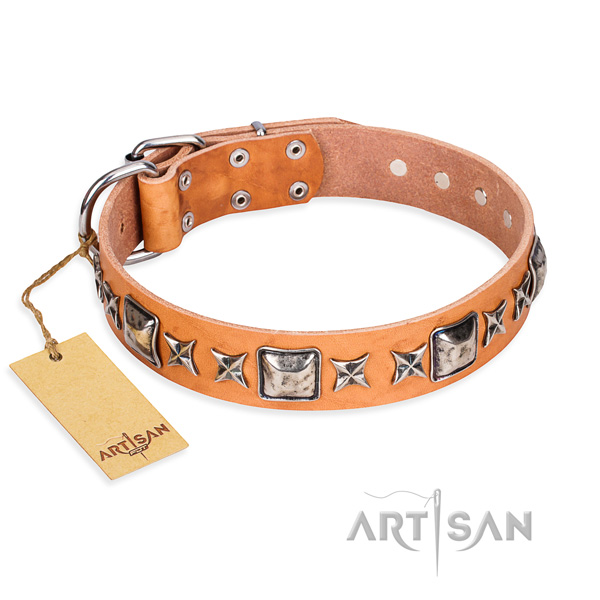 Fancy walking dog collar of fine quality leather with adornments