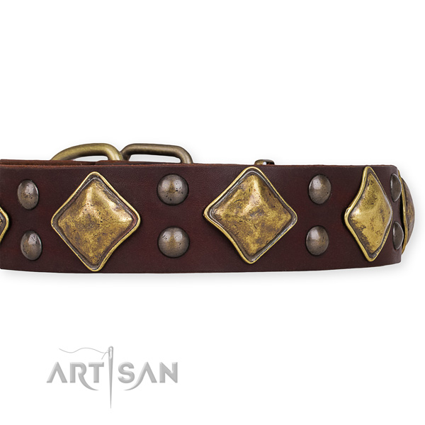Genuine leather dog collar with stunning rust-proof adornments