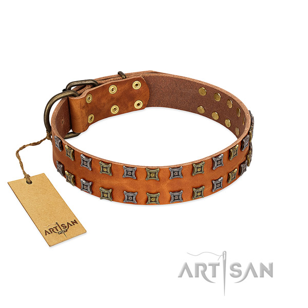 Strong leather dog collar with adornments for your canine