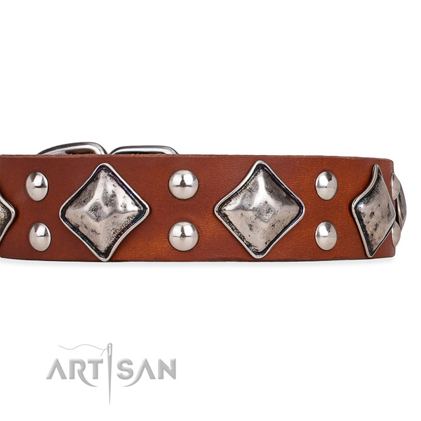 Genuine leather dog collar with unusual durable adornments