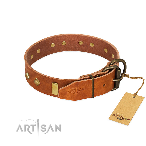 Daily use leather dog collar with top notch embellishments