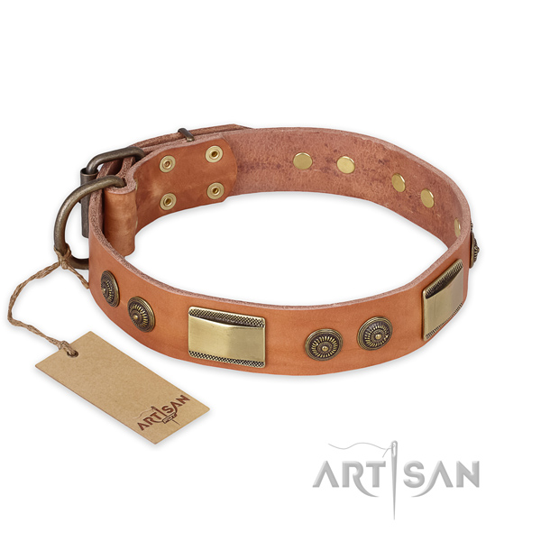 Adorned full grain natural leather dog collar for daily walking