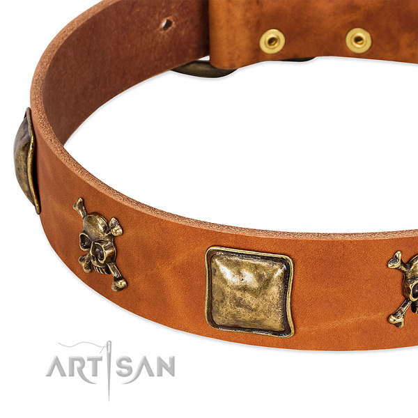 Amazing leather dog collar with reliable studs