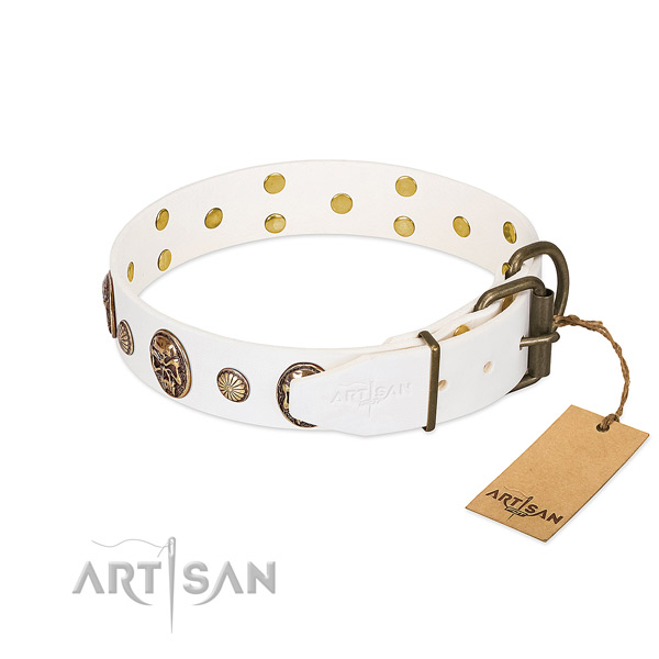Corrosion resistant fittings on full grain leather collar for everyday walking your pet
