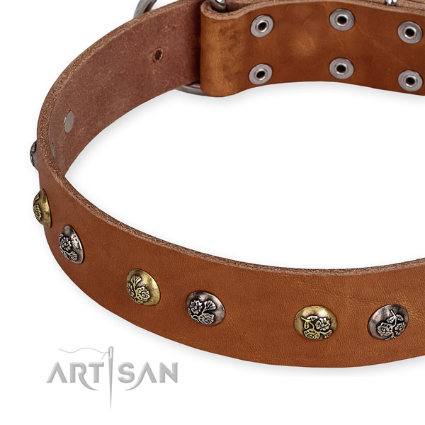 Leather dog collar with unusual durable embellishments