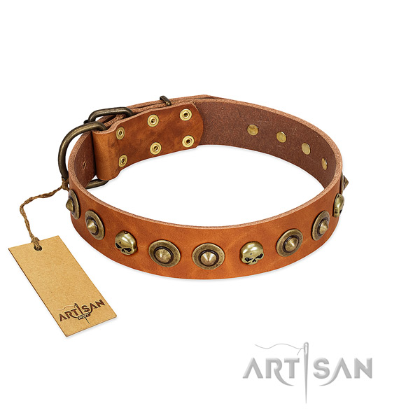 Genuine leather collar with incredible studs for your doggie