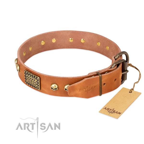 Corrosion resistant adornments on everyday walking dog collar