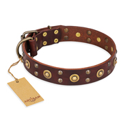 """Caprice of Fashion"" FDT Artisan Brown Leather dog Collar with Round Decorations"