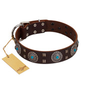 """Hypnotic Stones"" FDT Artisan Brown Leather dog Collar with Chrome Plated Brooches and Square Studs"