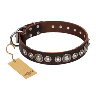 """Step and Sparkle"" FDT Artisan Glamorous Studded Brown Leather dog Collar"