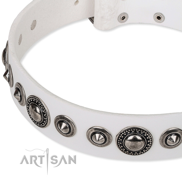 Everyday use embellished dog collar of finest quality full grain genuine leather
