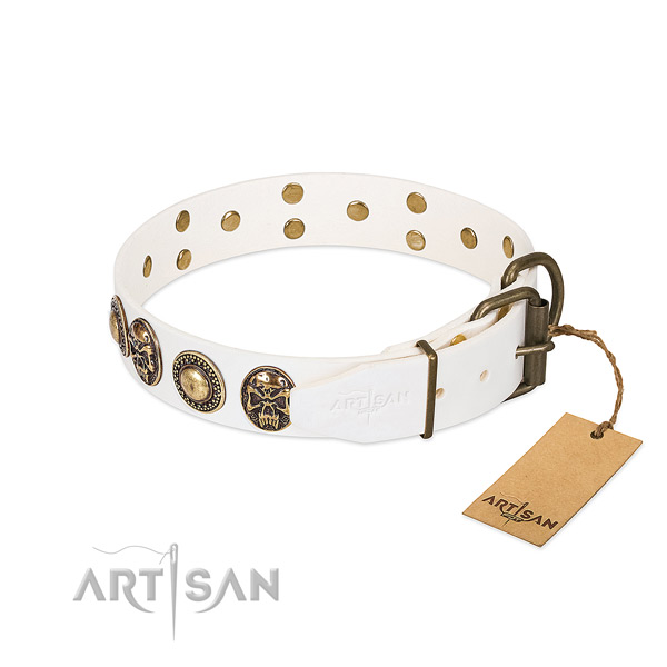Rust resistant traditional buckle on walking dog collar