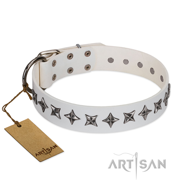 Daily use dog collar of finest quality full grain leather with adornments