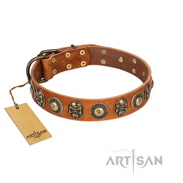Adjustable full grain natural leather dog collar for everyday walking your four-legged friend