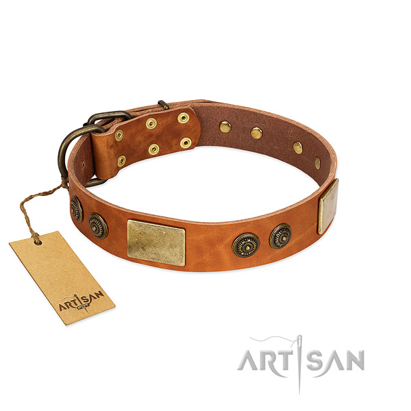 Impressive full grain natural leather dog collar for stylish walking