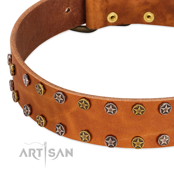 Daily use genuine leather dog collar with stunning studs