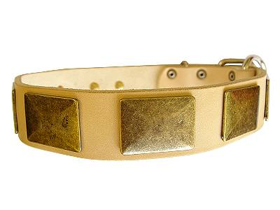 Tan Leather Dog Collar Decorated with Massive Vintage Brass Plates