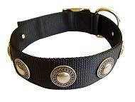 Nylon Dog collar with silver conchos